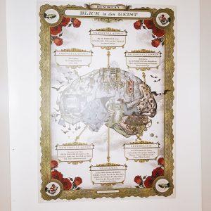 Poster mit Abbildung des Gehirns und Erklärungen bzgl. der Funktionen der Areale