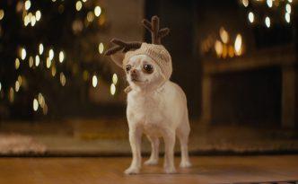 Hund mit Weihnachtsmütze - Frohe Einfachheiten