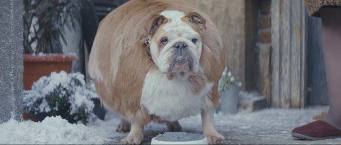 Kugelrund aufgeblasener Hund - EATKARUS